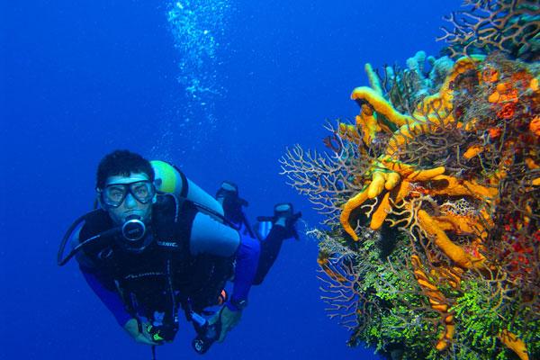 Wisata Menyelam Indonesia